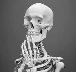 skeletonのイメージ画像